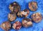 Almandiini Granaatti raaka L-koko