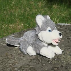 Pehmolelu Husky 40cm kirsusta hännänpäähän, makaava koira