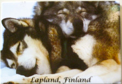 Magneetti: Husky koirat nukkuu