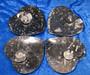 Lautanen: fossiililautanen, jossa mm. ammoniitteja ja oikosarvia, sydämen muotoinen n.16x16cm