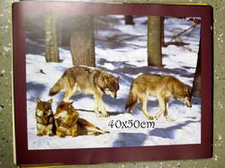 Juliste susilauma metsässä 40x50cm