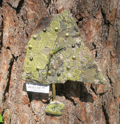 Heilurikello  kvartsiitti sammalkivi seinäkello 19x22cm 310-3h