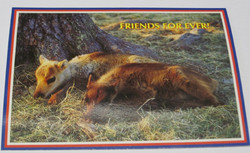 Postikortti ystävykset. 2 poronvasaa makuulla. Friends for ever
