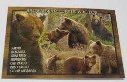 Postikortti Karhut metsässä - brown bear
