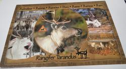 Postikortti poro, Reindeer, Renne, Rentier, Poro, Reno, Renna, Ren