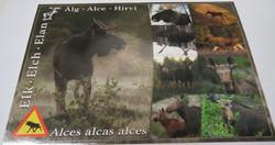 Postikortti Hirvi 9 kuvaa