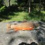 Pehmolelu nieriä eli rautu, 43cm kala