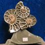 Ammoniitteja pyriitillä, korkeus 10cm, leveys 9cm