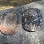 Fossiilitarjotin ammoniitteja ja oikosarvia, ruskea, 44x28,5cm