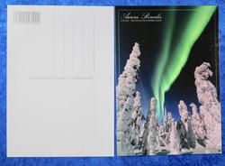 Postikortti Aurora Borealis. Vihreät revontulet ja tykkylumiset puut