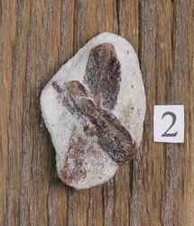 Stauroliitti ristikivi amulettikivi 4g 28x18mm nro2