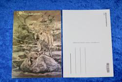 Postikortti Poronvasat, piirretty