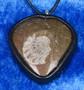 Riipus ammoniitti, nahkasomistein fossiiliriipus R