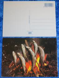 Postikortti kalat paistuu tikussa nuotiolla