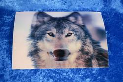 3D-postikortti suden pää 194x145mm