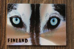 Magneetti huskyn siniset silmät, kimalteleva foliomagneetti 90x65mm