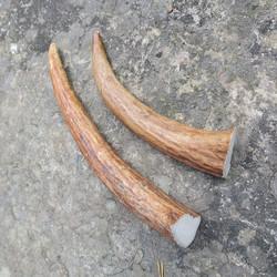 Sarvi Hirvensarven pää 14-20cm