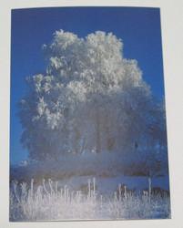 Postikortti lumiset, huuhteiset puut ja pensaat