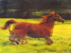 3D-juliste hevoset. Emä ja varsa juoksee pellolla. Iso 58x38cm