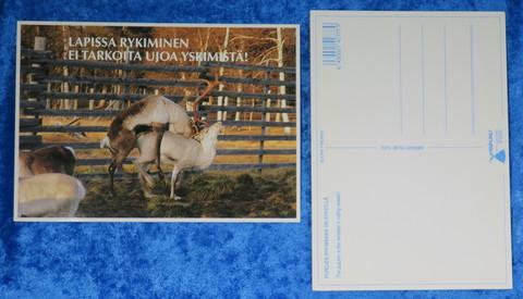 Postikortti Porot parittelemassa