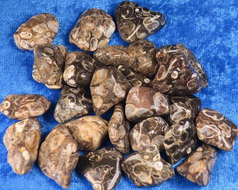 Turritella-akaatti rumpuhiottu etanafossiili 5-10g USA
