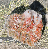 Vanadiniitti baryytti lyijyhohde 32g 30x30x25mm Marokko 12J