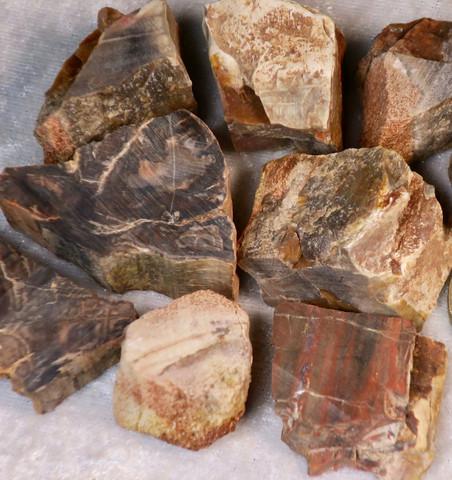 Kivettynyt puu raaka 20-25g Madagaskar