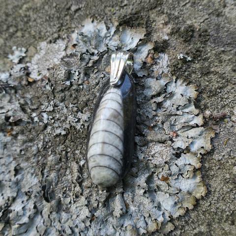 Riipus Orthoceras-oikosarvifossiili 38mm tylppä ja iso riipuslenkki
