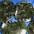 Aktinoliitti- Actinolite- Актинолит