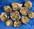 Andradiitti- Andradite- Aндродит granaatti