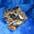 Vermikuliitti Vermiculite Вермикулит