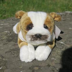 Pehmolelu Bulldoggi, bulldog koira