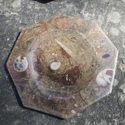 Lautanen fossiililautanen ammoniitteja ja oikosarvia, 8-kulmainen 19cm