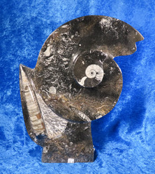 Fossiiliveistos jossa mm. ammoniitteja ja oikosarvifossiileita,  20x30cm