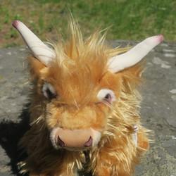 Pehmolelu Ylämaankarjan lehmä -Highland cow. Ihana!