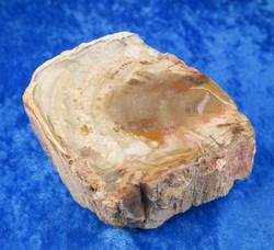 Kivettynyt puu raaka 212g osittain kiillotettu 73x60x30mm 23C