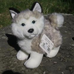 Pehmolelu Husky koiranpentu, korkeus 23cm