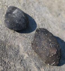 Boji-kivipari- Boji stones, isot