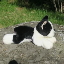 Pehmolelu Bostoninterrieri, pituus kirsusta hännänpäähän 28cm, koira
