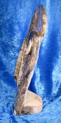 Fossiiliveistos jossa mm. ammoniitteja ja oikosarvifossiileita