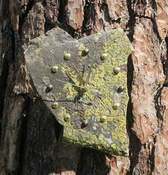 Seinäkello kvartsiitti sammalkivikello 16x23cm Tervola-Suomi nro 310-1