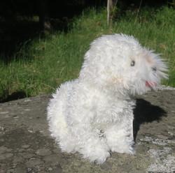 Pehmolelu Villakoira, valkoinen buudeli