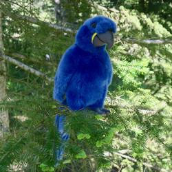 Pehmolelu Papukaija, iso 24cm, sininen