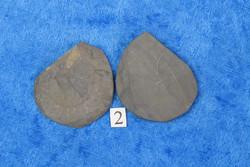 Ammoniitti PARI, halkaistu, pyriittiä, koko 3-2,5cm nro2
