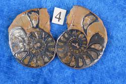 Ammoniitti PARI, halkaistu fossiili 15-25mm nro4 Marokko