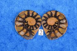 Ammoniitti PARI, halkaistu 27-31mm  fossiili nro2 Marokko