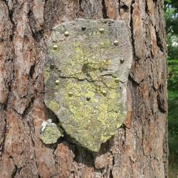 Heilurikello kvartsiitti sammalkivi seinäkello 30x25cm 310R