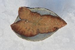 Glendoniitti 6cm 47g ikaiitti, halkaistu