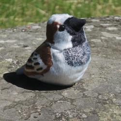 Pehmolelu varpunen, lintu ääntelee luonnollisella äänellä