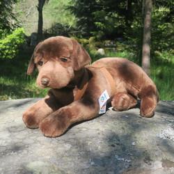 Pehmolelu Labradorinnoutaja ruskea,  Iso ja ihana!